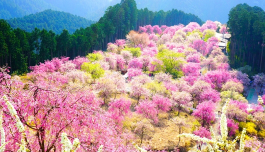 吉野山郵便局の風景印
