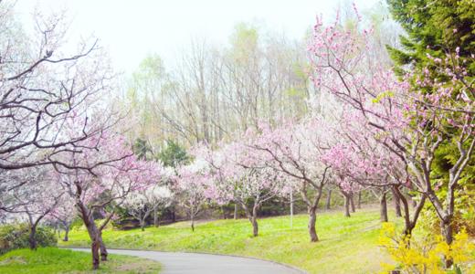 札幌平岡公園郵便局の風景印