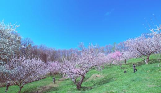札幌美しが丘郵便局の風景印
