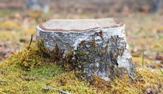 千歳白樺郵便局の風景印